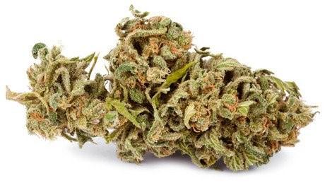 El cannabis y su consumo.